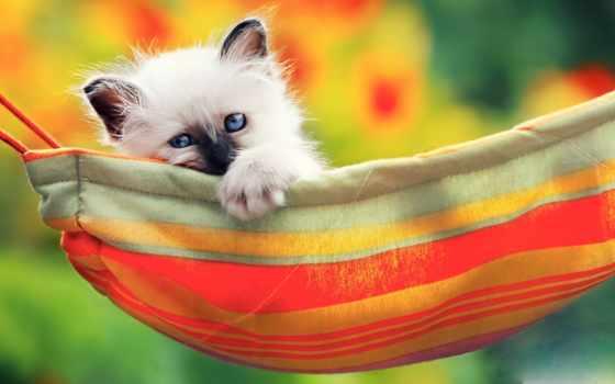 гамаке, девушка, кот, лежит, котенок, white,