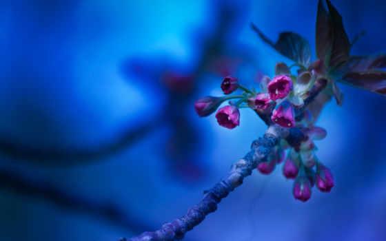 fone, cvety, синем, branch, цветущая, цветов, весна, уже, загружено, коллекция,