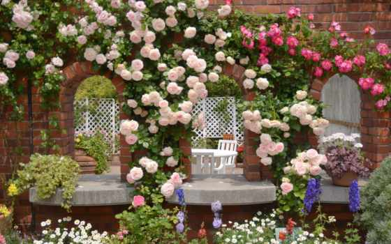 garden, коллекция, интересно, роза, смотреть, user, четки