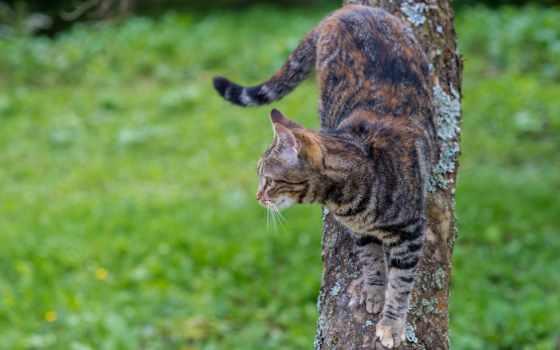 кот, картинка, взгляд, глаз, wildcat, şəkillər, small, wild, kitty