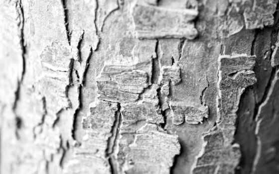 tree, bark, macro, les, texturas, desktop, árboles, cortezas, pack, kashebas,