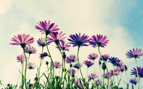цветы, flowers, sepia
