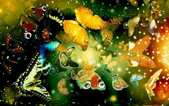 бабочки, много,