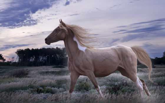 фотопанно, лошадь, заставки