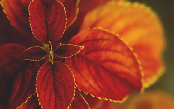 макро, растение, природа