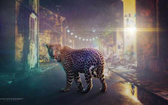город, улица, леопард