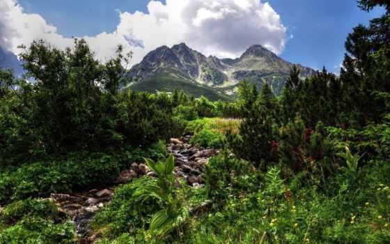 landscape, android, горы, природа, live, лес, обменник,