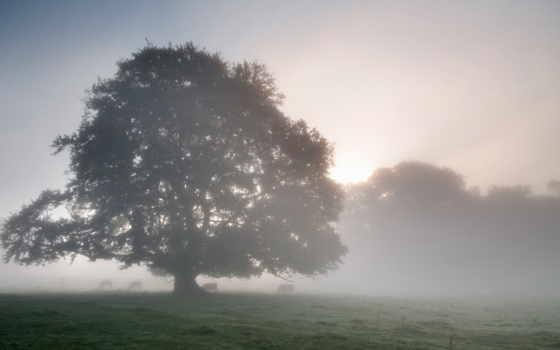 утро, mist, фоны