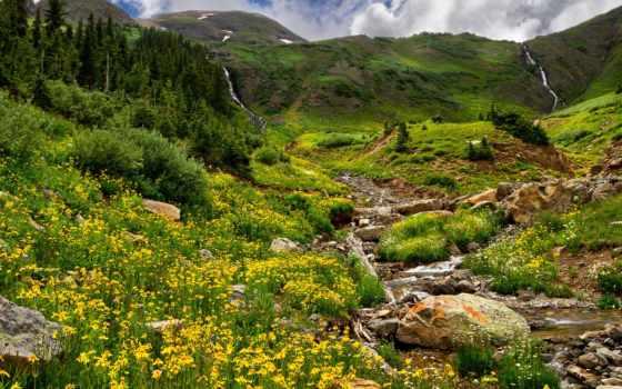 трава, лес, flowers, mountains, trees, природа, скалы, поле,
