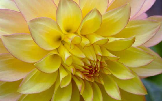 sfondi, per, макро, fiori, desktop, cellulare, foto, цветы,