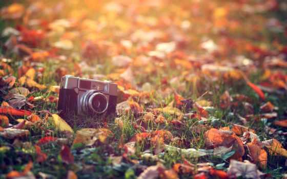 фотоаппарат, ретро, осень, макро, листва, свет, картинка, трава, взгляд, sun, старый,
