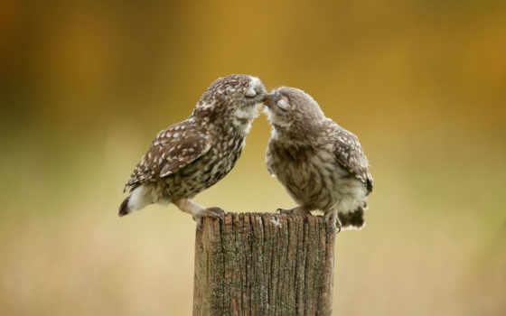 zhivotnye, burrowing, они, сзади, сова, everything, чувства, owls,