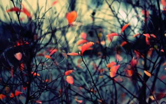 osen, priroda, ветки, листва,