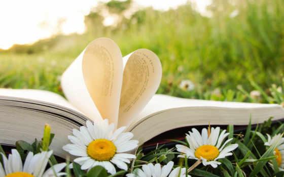 книга, открытая, лежит, против, ромашками, разных,
