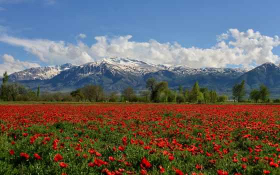 горы, turkey, маки, erzincan, munzur, гора, landscape, поле,