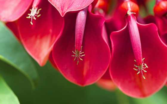 эритрина, pinterest, петушиный, animated, flowers, crest, see, об,