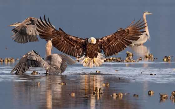 award, audubon, odubonovskii, птица, national, конкурс, социум, фото, winner, фотоконкурс, ornitologicheskii