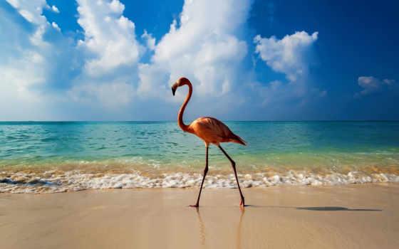 море, animal, пляж, water, landscape, облако, природа