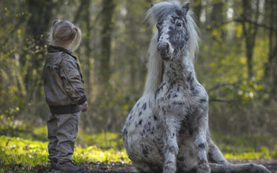 лошадь, девушка, animal, ребенок, пони, little, настроение, narrow