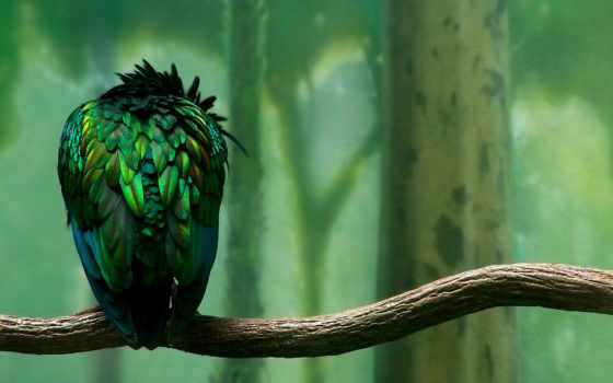 птица, sxga, ветка
