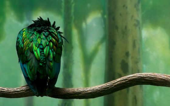 птица, sxga, ветка, normal, full, количество, качества,
