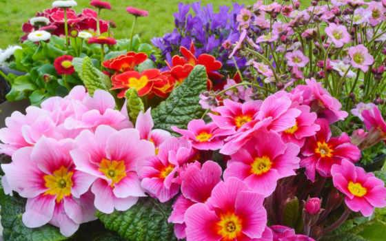 flowers, цветы, весна