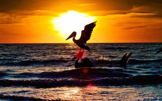 birds, animals, море