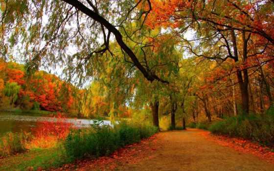 осень, landscape, pp