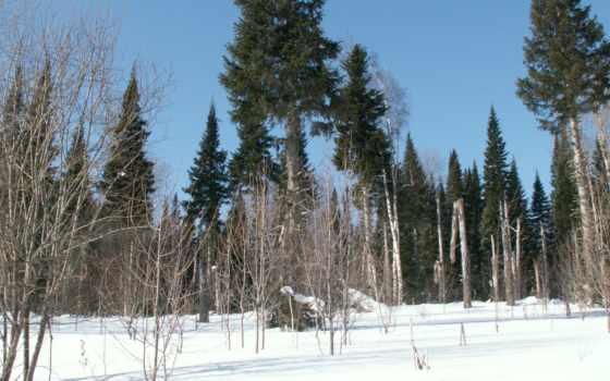 природа, зимнем