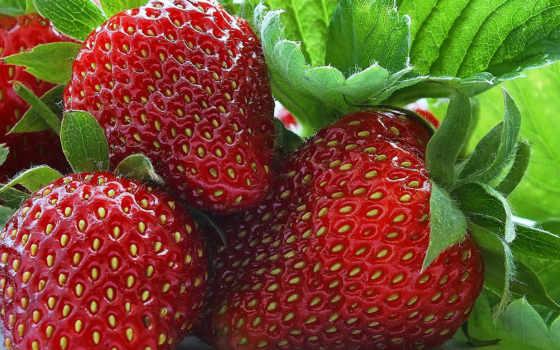макро, ягоды, клубника