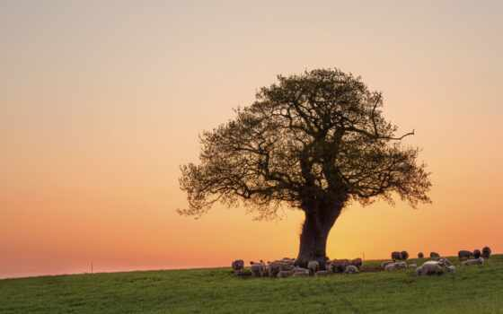 природа, добавлено, обоях, назад, разные, дерево, небо, collector, темы, года,