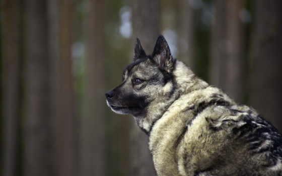 собака, dogs, every, animal, zhivotnye, щенок, home,