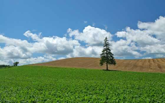 поле, дерево, культура