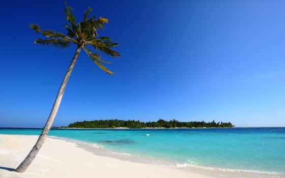 море, остров, maldives, песок, пальмы, очень, пляж,