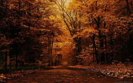 осень, лес, trees, природа, landscape, дерево, пасть,