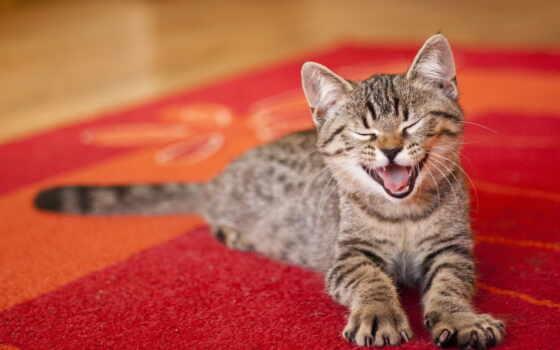 нравится, кошки, запах, когда, коту, тоже, люблю, кошек, унитаз, кот,