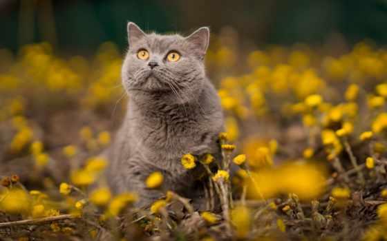 кошки, cvety, кот, zhivotnye, animal, природа, весна, мама, мачеха, британец, subscribe,