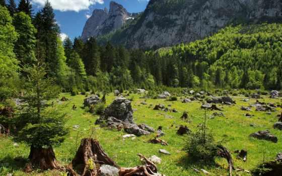 природа, лес, fir, ёль, android, trees,