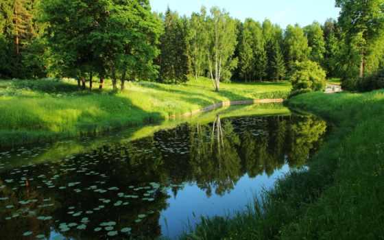 природа, trees, река