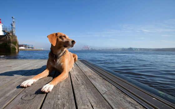 собака, море, закат
