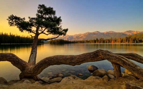 сол, puesta, montañas, del, lago, árbol, imágenes, bosque, conífera,