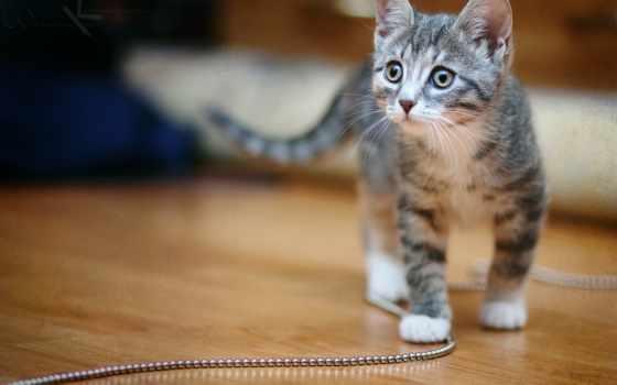котенок, кот, хорошо, киска, бусы, взгляд,