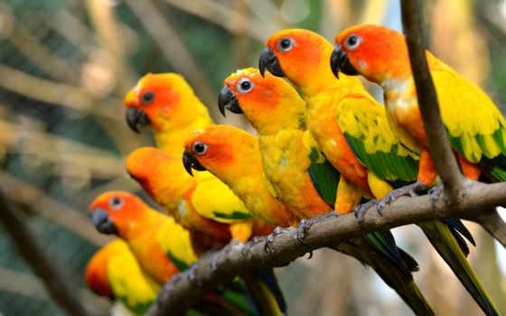 animal, animales, plumas, loro, colores, aguila, color, you, попугай,