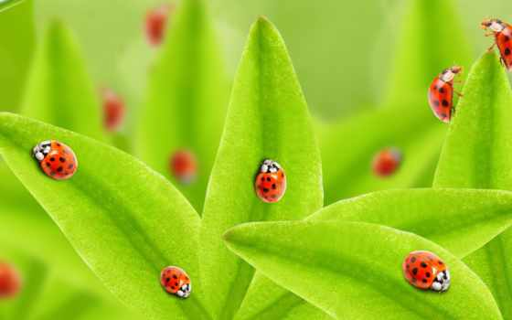 stock, images, photos, shutterstock, funny, фото, купить, картинка, ladybugs, дождь, фон,