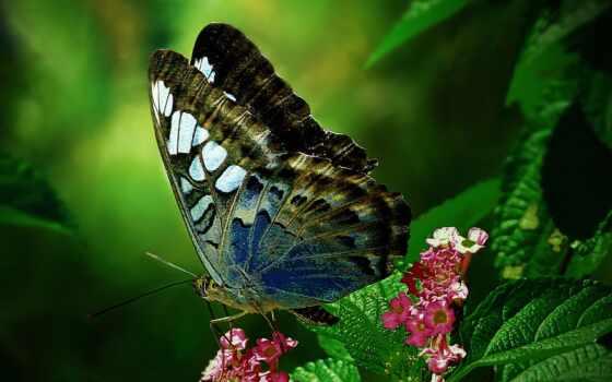 бабочка, макро, loaded, best, уж, их