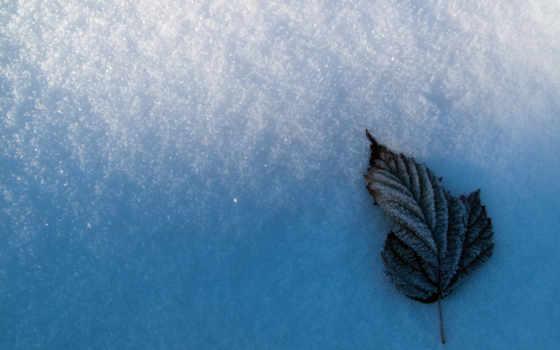 leaf, left