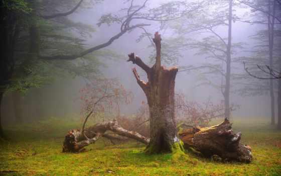 природа, лес, нашего, мира, красавица,