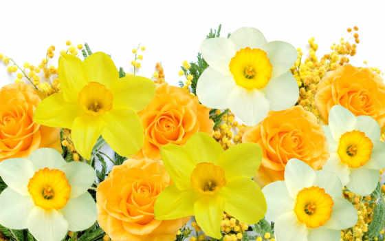 цветы, flowers, весна, марта, mimosa, delicate, мимоза, white, нарциссы, yellow, февр,