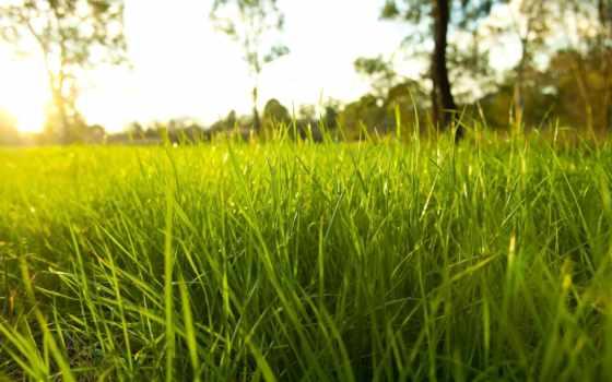 макро, трава, природа, капельки, густая, роса, зелёный,