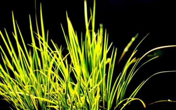 трава, контрастность, зелёный, dark, газон, теги, поле,